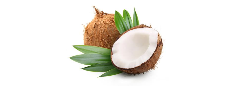 Frutta esotica for Pianta di cocco